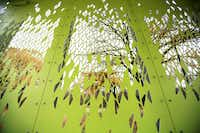 The leafy screen pattern was cut by water jet into the steel sidewalls of the new pavilion at College Park. Photograph taken on Nov. 25, 2013 near the Trinity Forest in Dallas.