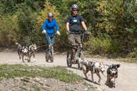 Pairs of huskies pull scooters on a trail outside Breckenridge, Colorado.  Like school teachers, these huskies used to have summers off, but not anymore.