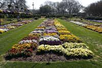 Although the Dallas Arboretum's trial gardens are not ornamental beds designed for Dallas Blooms, they are a boon to North Texas gardeners looking for inspiration and information about what works well in Dallas-area landscapes.