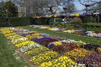 The Dallas Arboretum is one of the nation's botanical gardens to voluntarily participate in national trials of new plants. The data scientifically collected is shared with corporate horticulture companies, university researchers, retailers and consumers.