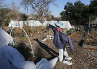 A scarecrow is seen at the Community Unitarian Universalist Church community garden.