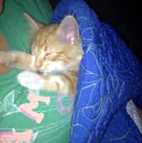 The rescued kitten was named Kia, after the KIA sport utility vehicle.