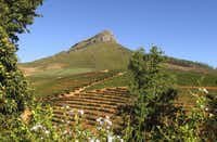 South Africa is a playground for wine-lovers. Vineyards crisscross the hills east of Cape Town.