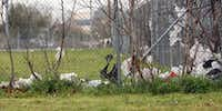 Supporters of Dallas' new bag ordinance hope lots of shoppers will stop using throwaway bags, opting instead to bring reusable ones with them. Plastic bags often end up as litter, like these on a fence behind a strip mall on Grand Avenue in Dallas.Kye R. Lee  -  Staff Photographer