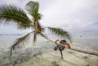 Local boy plays on palm trees on beach of Kosrae, Federated States of Micronesia (FSM).