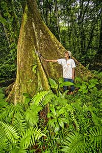 Local man stands next to huge buttress root of giant Terminalia carolinensis tree known locally as a Ka tree. This is the only place in the Pacific where these trees grow to such large size. Kosrae, Federated States of Micronesia (FSM).