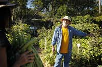 Don Lambert and his wife, Tiah Lambert, pick vegetables at the Live Oak Community Garden in late October.