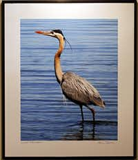 A photograph of a crane by artist Anna Palmer hangs in a gallery showing at the Texas Discovery Center Tuesday, December 18, 2012 at Fair Park in Dallas.