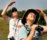 Carolyn Gritzmaker and Eileen Berger try to identify a bird while on a recent tour of Mockingbird Nature Park in Midlothian. The guided tour was aimed at teaching enthusiasts to identify native wildflowers. and the hummingbirds, butterflies and beneficial insects they attract.Steve Hamm - Special Contributor