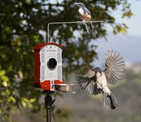 The Bird Photo Booth allows birders to rig up an iPhone or GoPro camera to get close-ups using its built-in macro lens. A bird landing on the feeder triggers the camera for stills or video.