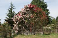 A cabin on Anne Belovich's property in Washington state is blanketed with 'Crimson Shower' and 'La Fraicheur' rambler roses.Anne Belovich photos