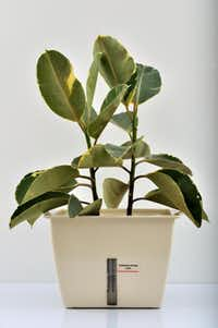 Plant Air Purifier is an air-filtration system that includes a planter with a built-in electric fan, ceramic growing medium and activated carbon. $229, plantairpurifier.com
