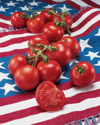 'Fourth of July' is a Campari-size tomato.W. Atlee Burpee Photos - W. Atlee Burpee