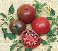 'Black Krim', one of the black heirloom tomatoes, is early to produce and very tasty.W. ATLEE BURPEE  - W. Atlee Burpee