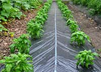 A Flora-Flow All-in-One Mat combines drip irrigation and a weed-suppressing mat to water plants and discourage weeds.Harris Seeds