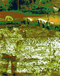 "Du Chau, ""Ricefield, 2010,"" silkscreen printing on paper. The print will be on display as part of an exhibit at the Kirk Hopper Fine Art Gallery in Dallas."