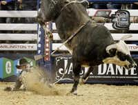 """Guilherme Marchi was thrown from a bull during an event this month at AT&T Stadium in Arlington. Head injuries are tougher to prevent in rodeo than in football. Restrictions can help in sports like football, Freeman said. """"but bulls don't play by the rules.""""Nathan Hunsinger  -  Staff Photographer"""