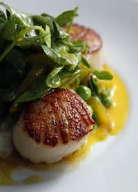 Seared cape cod scallops with risotto, English peas, pea tendrils and saffron is featured on the menu at Lark on the Park, near Klyde Warren Park, one of the newest dining hot spots in the area.