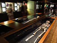 The skeletons of several victims of the Vasa disaster repose in the lower level of the ship's museum in Stockholm, Sweden.