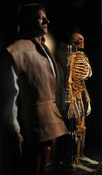 The skeleton of an archer recovered from the wreck of the Tudor warship Mary Rose is on display at the new Mary Rose Museum in Portsmouth, Hampshire, southern England.