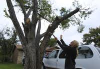 Arborist Steve Houser has suggestions on what should be done about the elm that caused a dispute between two neighbors.