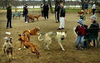 Dog owners mingle while their pets frolic in February, 2003 at the Mockingbird Point Dog Park, which opened in 2001 at the lake's north end.