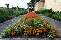By the end of last May, Bob Quimby's spring palette in garden beds had been taken over by the hot, bright colors of summer: Orange 'Profusion' zinnias and red salvia. Bi-colored violas hung on despite the heat.