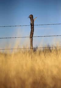 A barbed wire fence marks the edge of a ranch on Texas Highway 302, east of Mentone in Loving County.