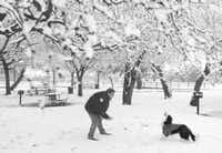Ki Fisher of Euless spends some quality time with his pet, tossing a snowball for his border collie, Monster, to catch at Midway Park in Euless.