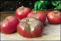 "'Cherokee Purple' is an all-time favorite of William D. Adams, author of ""The Texas Tomato Handbook."" ""If you like tomatoes with a little salt on them, you're going to love this one,"" he says. Tomato 'Cherokee Purple'( W. Atlee Burpee  - W. Atlee Burpee)"