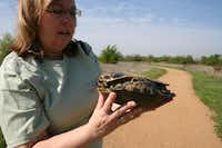 Master naturalist Donna Cole examines a turtle she discovered on a nature walk along Shoreline Trail in The Colony.Staff photo by DANIEL HOUSTON - neighborsgo