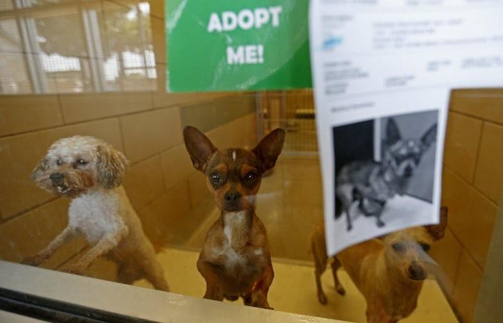 Cat Adoption Dallas Area