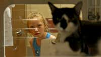 Jayden Robinson, 7, takes a look at a kitten awaiting adoption at the Mesquite shelter.(Jae S. Lee/Staff Photographer)