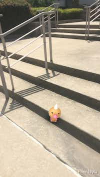 "A wild Weedle appears on the steps outsides of The Dallas Morning News through the augmented-reality mobile game ""Pokemon Go"" in Dallas on Wednesday, July 13, 2016.(Ellen Meyers/The Dallas Morning News)"