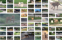 "A consulting firm took numerous photos while conducting a ""census"" of loose dogs on the streets of Dallas. (Boston Consulting Group)"