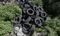 "<p><span style=""font-size: 1em; line-height: 1.364; background-color: transparent;"">In this photo taken June 22, 2016, a pile of tires sits in a neighborhood near downtown Houston. Trash piles like this are textbook habitat for the mosquitoes that carry </span><a name=""firsthit"" id=""firsthit"" style=""font-size: 1em; line-height: 1.364; background-color: transparent;""></a><span style=""font-size: 1em; line-height: 1.364; background-color: transparent;"">Zika, and one example of the challenge facing public health officials.</span></p>(<p><span style=""font-size: 1em; line-height: 1.364; background-color: transparent;"">AP Photo/David J. Phillip</span><br></p><p></p>)"