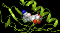 """<p><span style=""""font-size: 1em; line-height: 1.364; background-color: transparent;"""">Peloton Therapeutics' drug (center) binds to its target, hypoxia-inducible factor HIF-2a (green), as a potential treatment for kidney cancer.</span></p>(Peloton Therapeutics)"""