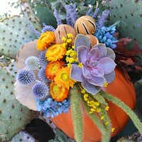 Dr Delphinium offers a pair of workshops to create flower-filled pumpkins.