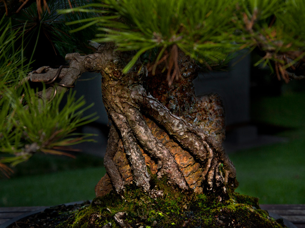 Dallas Bonsai Whisperer Has A Tree That S More Than 700 Years Old Arts News
