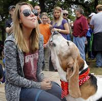 <p>Carly Shrout of Carrollton and her basset hound Molly won first place in the howling contest at the Basset Hound Shuffle and Games in 2013. (David Woo/Staff Photographer)</p>