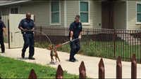 Dallas police and animal control officers wrangle a dog that authorities say bit a man in the 2200 block of Lea Crest Drive in east Oak Cliff in May.
