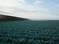 """Richard Misrach's <i>Cabbage Crop and Wall, Brownsville, Texas</i>, 2015 inkjet print, courtesy Fraenkel Gallery, San Francisco, Pace/MacGill Gallery, New York and Marc Selwyn Fine Art, LA, is part of the """"Border Cantos: Richard Misrach 
