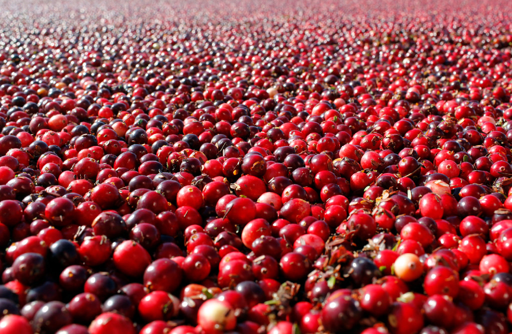 cranberries don t prevent or cure urinary tract infections