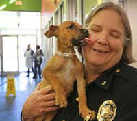 Dallas police Maj. Barbara Hobbs got a little love from Teena at Dallas Animal Services on Friday. (Louis DeLuca/Staff Photographer)