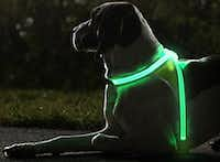 You and your pooch can both be seen with NoxGear(NoxGear)