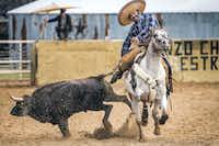 Alejandro Estrada Sr. took part in a coleadero, a type of Mexican rodeo, at Lienzo Charro Estrada in southern Dallas County on Dec. 12, 2015.(Smiley N. Pool)