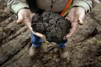 2005 FILE PHOTO -- A sample of the tar-like substance from a Syncrude Canada Ltd. mine in Alberta before it is manufactured. It costs between $12 and $18 a barrel to make crude oil out of the oil sands and 175 billion barrels of thick oil are laced through an area the size of Florida in northern Alberta, Canada.(Lara Solt/Staff photographer)