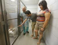 <p>Employee Robert Baker, left, helps Gus and Cindy Camarillo as they look for a dog at Dallas Animal Services.</p>(Michael Ainsworth/The Dallas Morning News)
