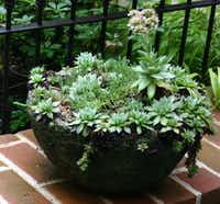 You can create a small succulent garden in a pot.(Ann McCormick)
