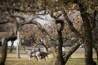 A group on horseback rides through Village Creek Park on Saturday, Dec. 24, 2016, in Fort Worth. Christmas Eve brought unseasonably warm temperatures to North Texas, with highs across the region reaching the 70s.(Smiley N. Pool/Staff Photographer)